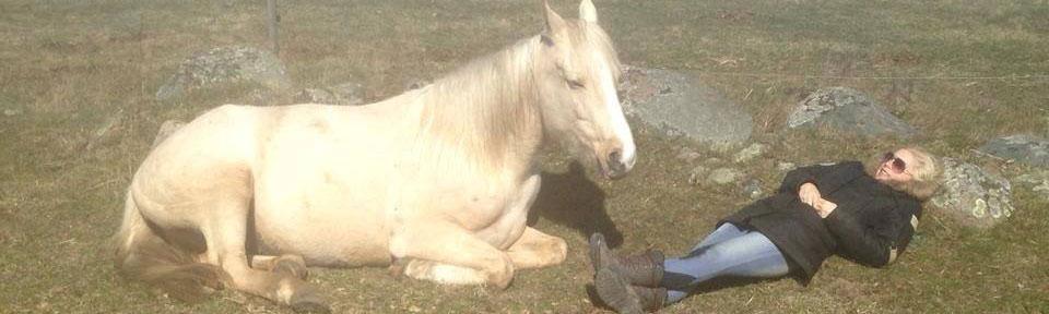 Sammankoppla med hästar